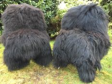 Unique pieces - two very large nature black/brown longhair Iceland sheepskins/lambskins