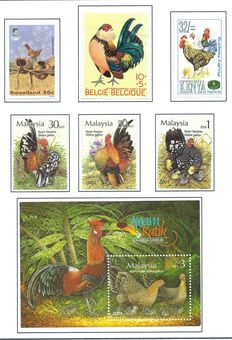 Birds - Theme collection chickens and pheasants in album