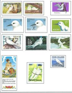 Birds theme – Charadriiformes (Plovers, snipes, gulls, terns, etc.) – Special collection in a homemade album
