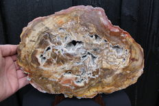 Slab of petrified wood with quartz inclusions - 29.5 x 21 x 2 cm - 2.29 kg