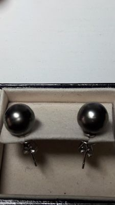 18k black south sea pearl earrings