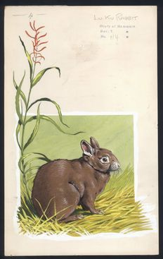 "Neave Parker (1910-1961) - Original illustration ""Liu-Kiu rabbit"" - early 1950s"