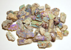 Opalized plant fossils  - various sizes - 125ct - 25gm