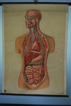 Old anatomical school poster with image of a man, Deutsches Hygiene Museum
