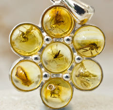 Lovely Sterling Silver And Baltic Amber Pendant With Seven Fossil Insects - 29 x 19 x 4mm