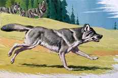 "Neave Parker (1910-1961) - Original illustration ""Grey wolf"" - early 1950s"