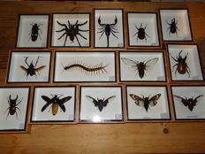 Interesting collection of Insect display cases - 12.5 x 15cm  (14)