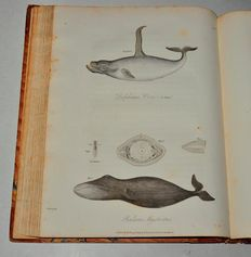 Bernard O'Reilly - Greenland, The Adjacent Seas, And The North-West Passage To The Pacific Ocean, Illustrated In A Voyage To Davis's Strait, During The Summer Of 1817 - 1818