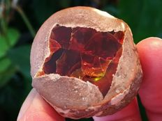 Fire opal in its matrix -  3.8 x 3.6 x 2.6 cm - 34 gm