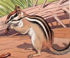 "Neave Parker (1910-1961) - Original illustration ""Chipmunk"" - early 1950s"