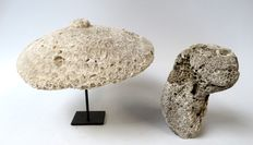 Rare fossilized coral urn lid and ancestor figure - Atoni - Timor - Indonesia