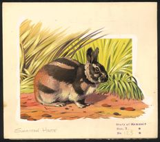 "Neave Parker (1910-1961) - Original illustration ""Sumatran hare"" - early 1950s"