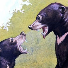 "Neave Parker (1910-1961) - Original illustration ""Sun bear"" - early 1950s"