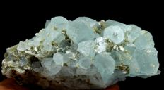Terminated Aquamarine Crystal cluster with Muscovite - 115 x 45 x 47 mm - 379gm