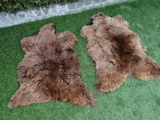 Two large & thick, high quality sheepskins
