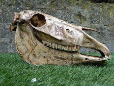 Large carved horse skull - Belu/Atoni Tribes - Timor & Sumba - Indonesia