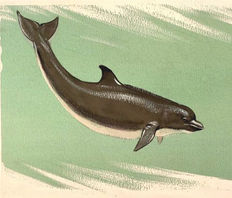 "Neave Parker (1910-1961) - Original illustration ""Bottle vored dolphin"" - early 1950s"