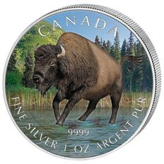 Canada - 1 x 5 CAD - Bison 2013 - Wildlife Series 2013-999 silver coin - coloured