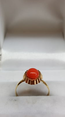 14 kt yellow gold ring set with a Mediterranean precious coral, no reserve price!