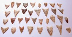 Lot with 35 Neolithic arrowheads - 19-37 mm (35)