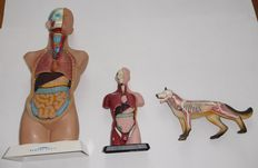 Lot consisting of 3 anatomic plastic figures / 2nd half of 20th century