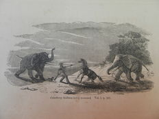 Roualeyn Gordon Cumming - A Hunter's Life among Lions, Elephants and other wild animals of South Africa - 1857