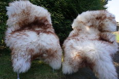 Lot consisting of 2 large mouflon flamed lambskins/sheepskins - cuddly and soft