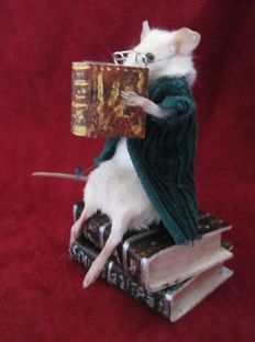 "Taxidermy - Weird and Wonderful ""Professor Mouse"" - Mus musculus - 11cm"