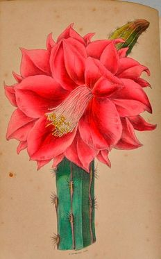Robert Tyas - Popular Flowers [...] Their Cultivation, Propagation and General Treatment for all Seasons - 1843/1845