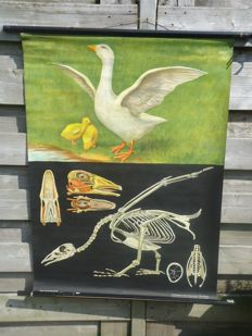 Lovely school poster of Jung-Koch-Quentell; The Goose