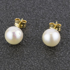 18 kt (7500/1000) yellow gold - Earrings with 8.5 mm cultured Akoya pearls