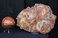 Petrified Wood - slice and sphere - 7.7 and 24cm - 1761gm  (2)