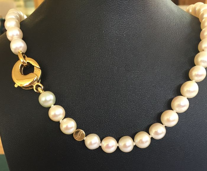 Shoeffel - Cultured pearl (Akoya) necklace with gold lobster clasp - 43 cm long