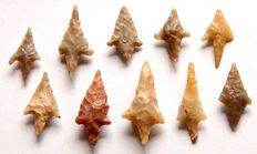 10 Neolithic arrowheads from Algeria - 18 - 29 mm (10)