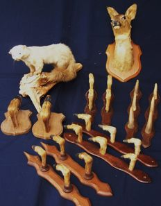 Collection of vintage French taxidermy - Roe Deer, Beech Marten and various mounted Deer Slot Racks  (12)