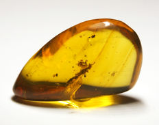 Burmite amber with insects - 19 x 12 mm