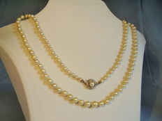 Real white akoya pearl necklace in increasing size
