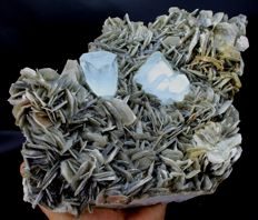 Large Undamaged Natural Aquamarine Crystals Cluster on Muscovite - 215 x 150 x 73 mm - 2577 gm