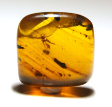 Burmite amber with insect - 12 x 11 mm