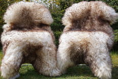 Lot consisting of 2  XXL large, very thick mouflon mottled lambskins/sheepskins - cuddly and soft