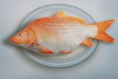Art Grafts - Fish Dish
