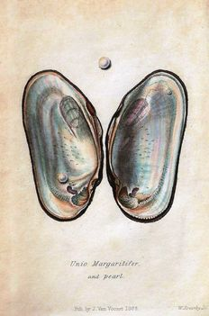 J.G. Jeffreys - British Conchology, or an account of the Mollusca which now inhabit the British Isles and the surrounding seas - 5 volumes - 1862/1869