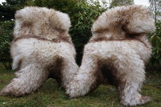 Lot consisting of 2 XXL large and very thick mouflon mottled lambskins/sheepskins - cuddly and soft
