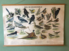 Linen school poster with forest and meadow birds