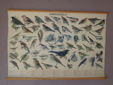 "Very nice original school poster / school map with ""song birds"". On this linen poster 57 birds are shown with birds that appear in The Netherlands."