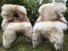 Lot consisting of two - XXL large and very thick mouflon mottled lambskins/sheepskins - cuddly and soft