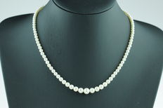Akoya pearl necklace with 14 karat white gold clasp, ascending model, length 46 cm.