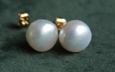 14k Gold earrings with pearls - 9.9 mm