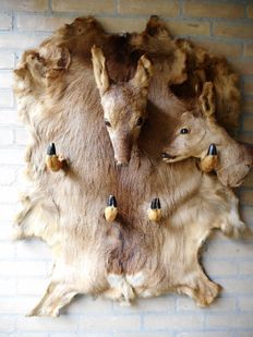 Large coat rack of deer skin and two deer heads