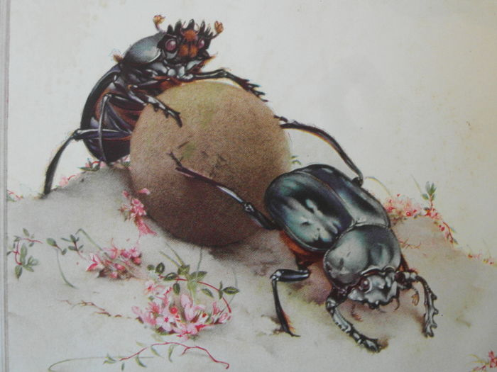 Image result for fabre's book of insects